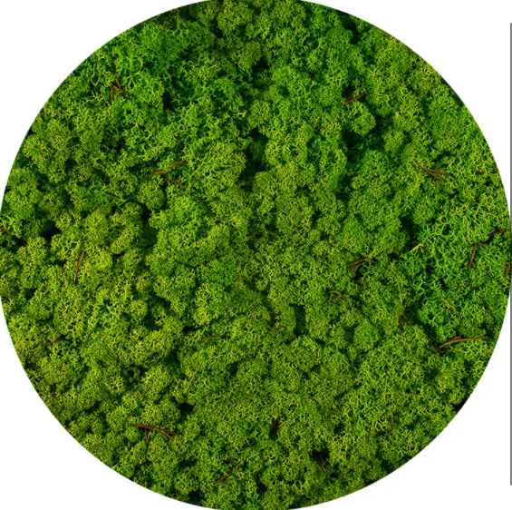 Licheni Norvegieni verde iarba deschis 79