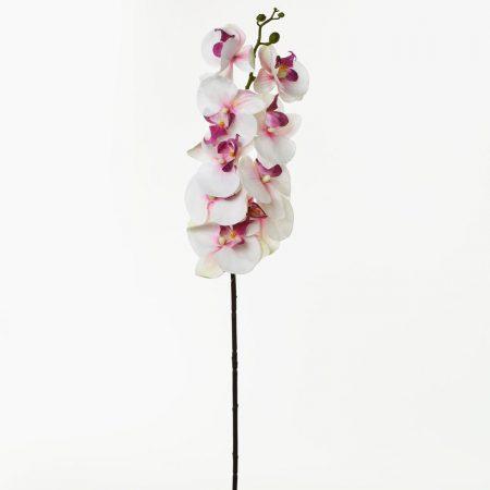 Orhidee 97 cm