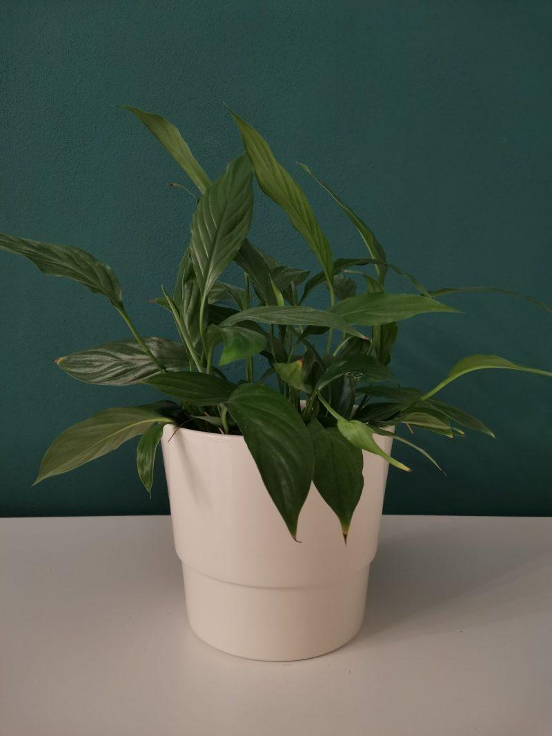 Vase ceramica 18 cm