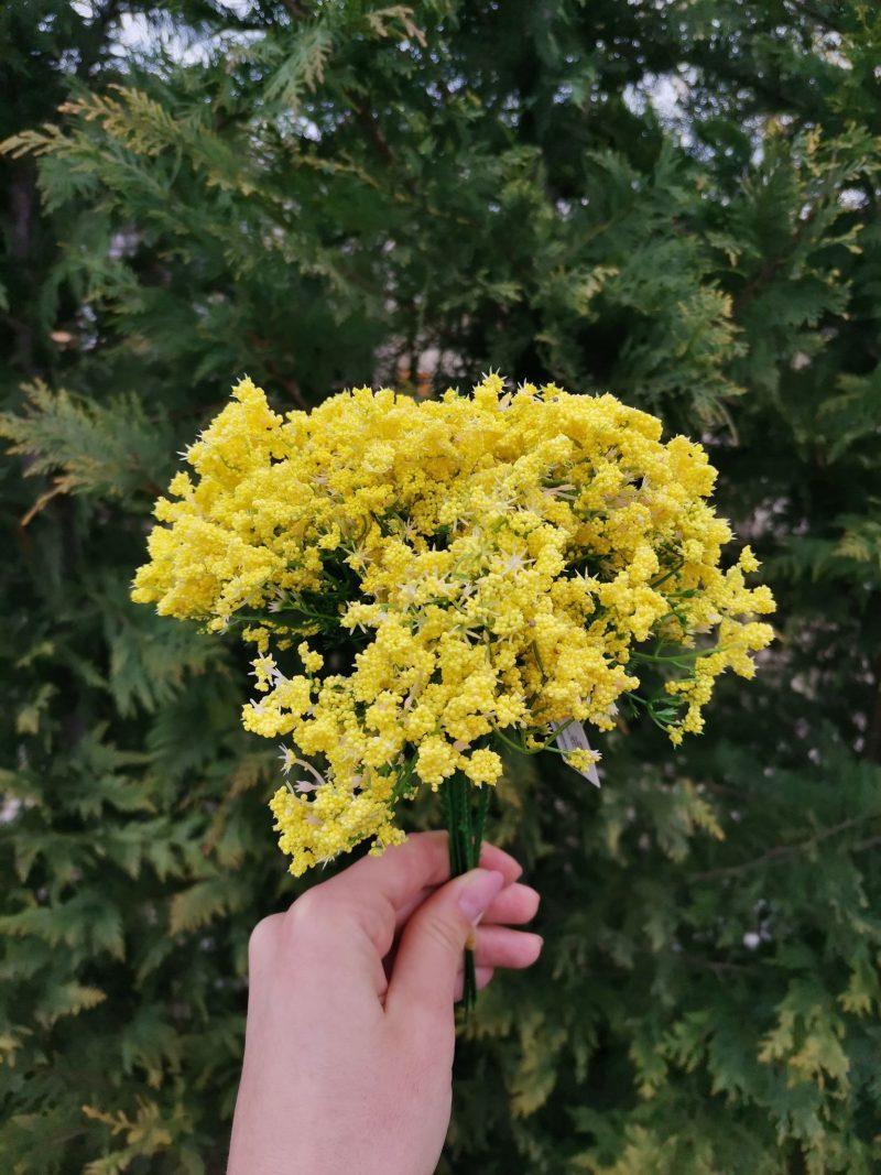 Floare de marar 21 cm