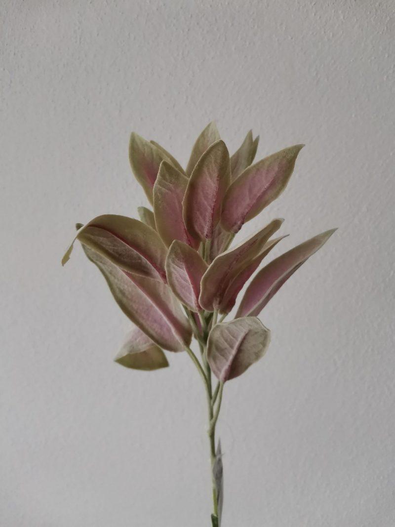 Frunze 32 cm