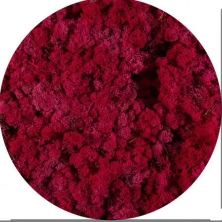 Licheni norvegieni rosu carmin 72
