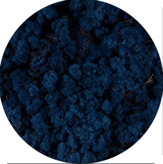 Licheni norvegieni albastru clasic 84