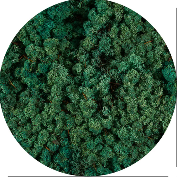 Licheni norvegieni verde pacific 87