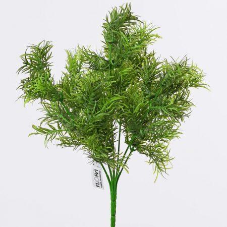 Asparagus 7 crengute