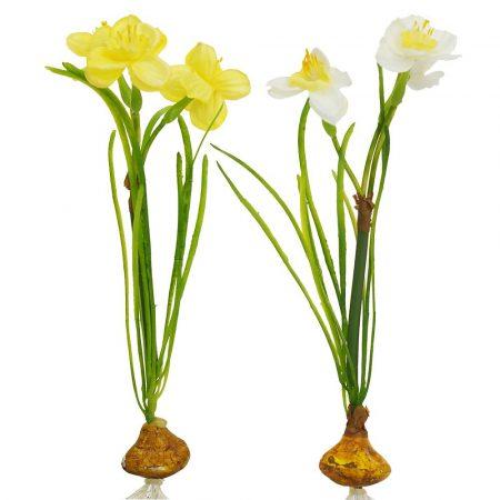 Narcise artificiale cu radacina descoperita