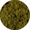 Licheni norvegieni olive 82