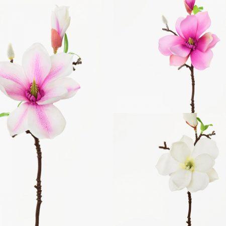 Magnolie 36 cm