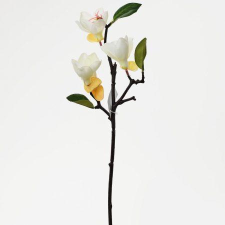 Magnolie crem 40 cm