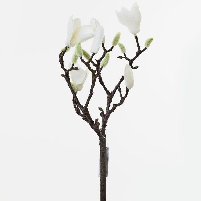 Magnolie 40 cm