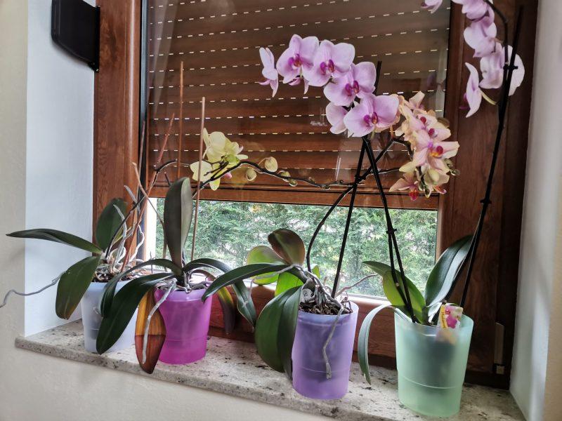Ghiveci pentru orhidee 15 cm