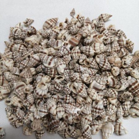 Scoici 250 gr