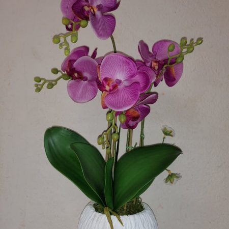 Orhidee in ghiveci 51 cm