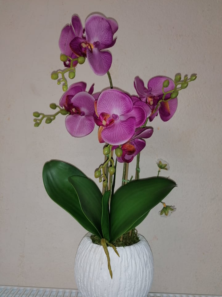 Orhidee in ghiveci 51 cm -