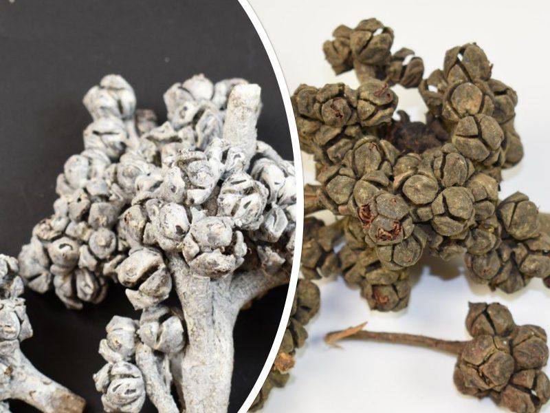 Ciorchin de cupressus 0.2 kg