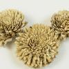 Capete crizanteme ming 8 cm