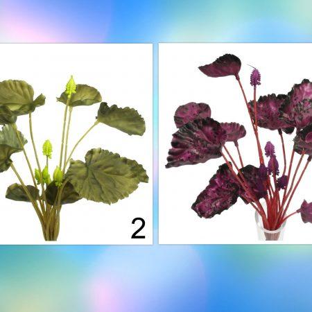 Begonia 29 cm